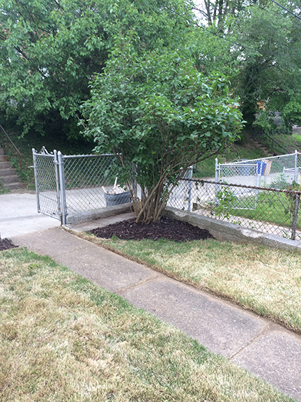 corner-mulch-bed-and-tree