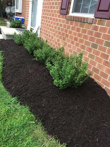 mulch-with-plants