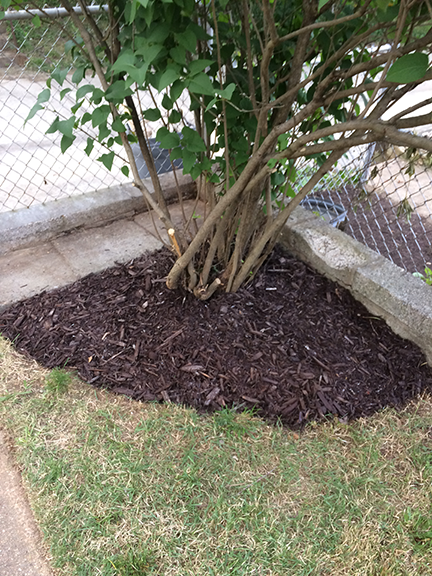 corner-mulch-bed-with-tree