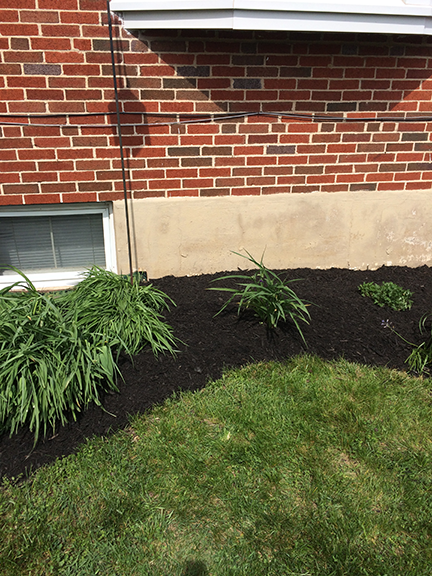 mulch-with-house-and-daylilies