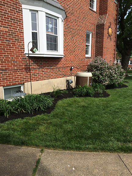 mulch-on-side-of-house-with-daylilies