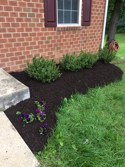 mulch-bed-with-small-bushes