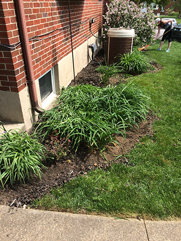 old-mulch-bed-with-daylilies