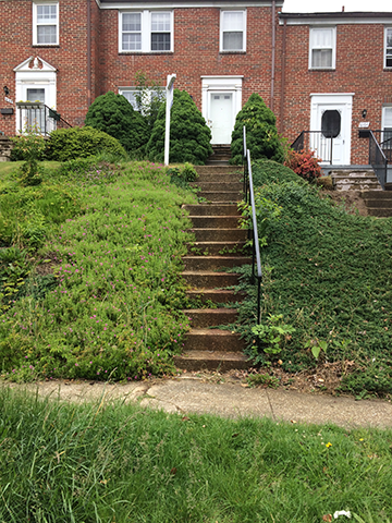 weeds-growing-over-steps-in-front-of-house
